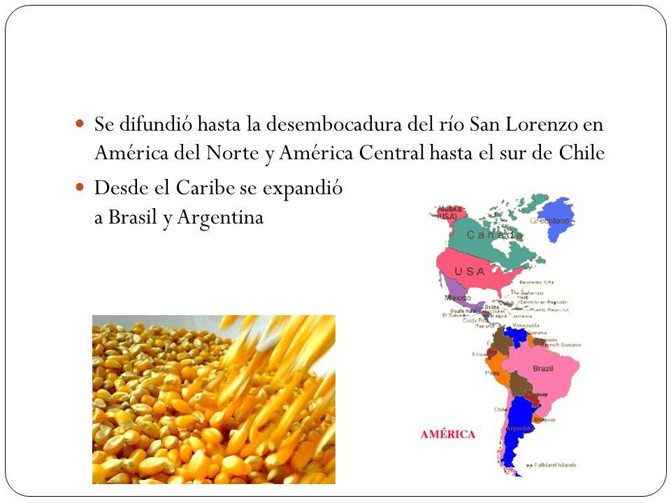Se difundió hasta la desembocadura del río San Lorenzo en América del Norte y América Central hasta el sur de Chile Desde el Caribe se expandió a Bras