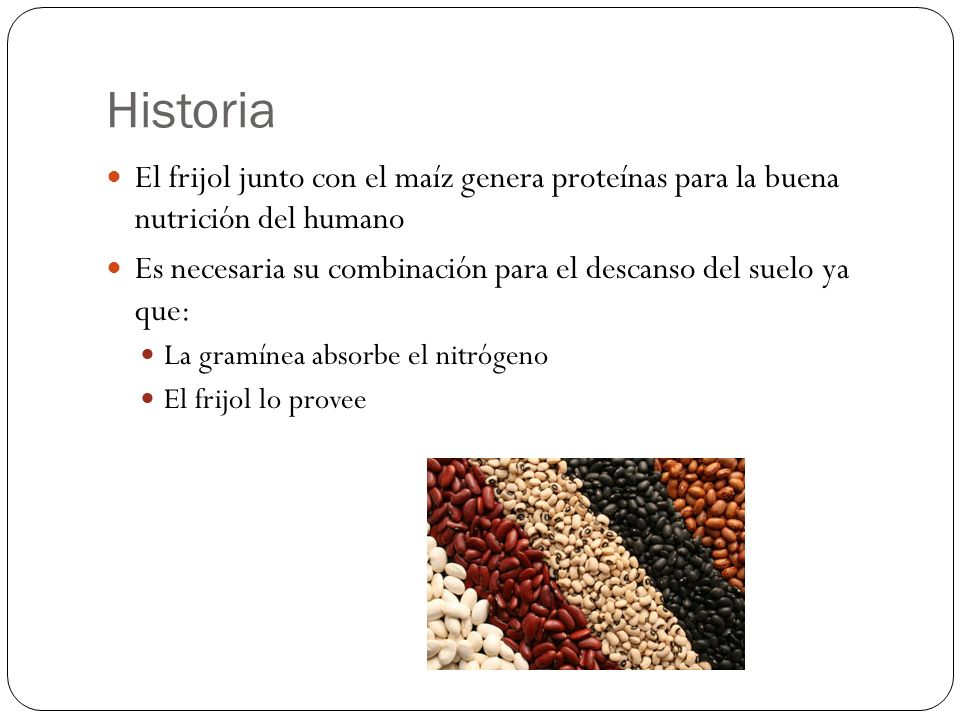 Historia El frijol junto con el maíz genera proteínas para la buena nutrición del humano Es necesaria su combinación para el descanso del suelo ya que