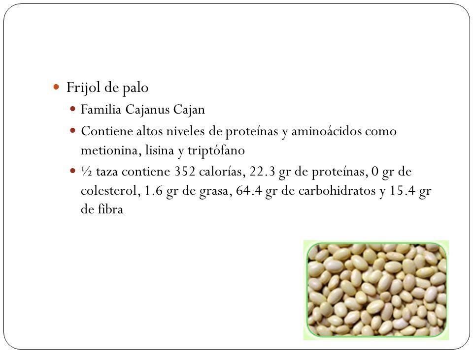 Frijol de palo Familia Cajanus Cajan Contiene altos niveles de proteínas y aminoácidos como metionina, lisina y triptófano ½ taza contiene 352 caloría