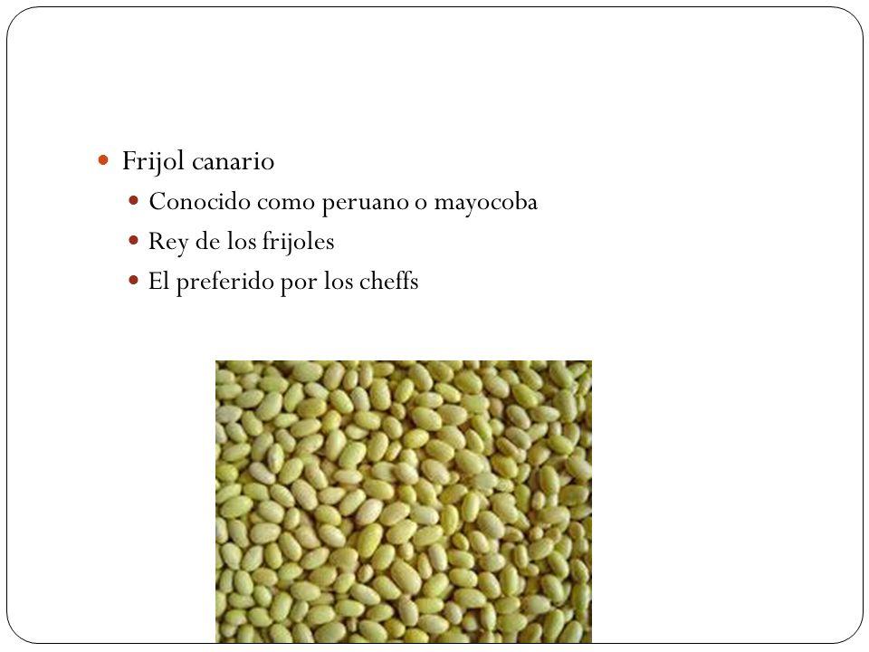 Frijol canario Conocido como peruano o mayocoba Rey de los frijoles El preferido por los cheffs