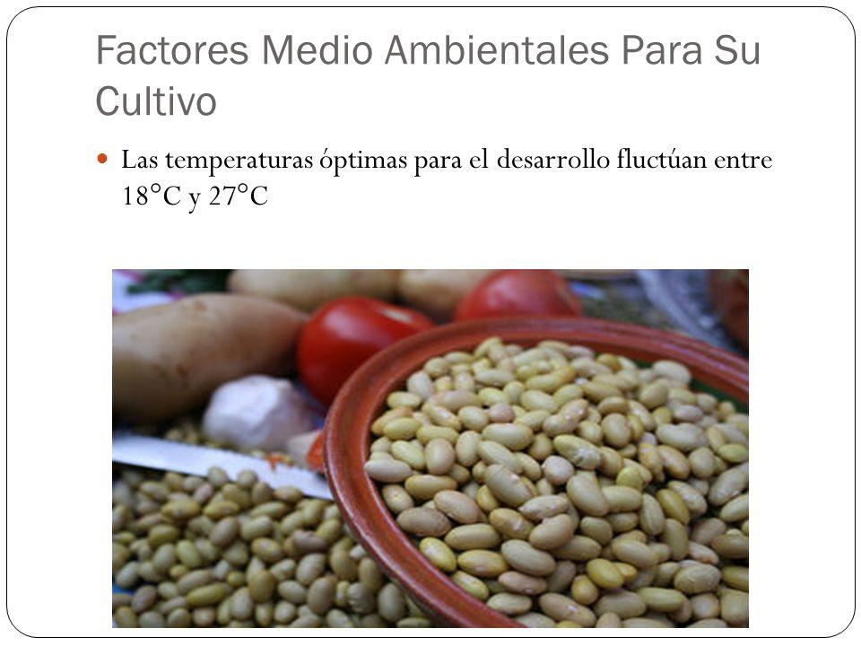 Factores Medio Ambientales Para Su Cultivo Las temperaturas óptimas para el desarrollo fluctúan entre 18°C y 27°C