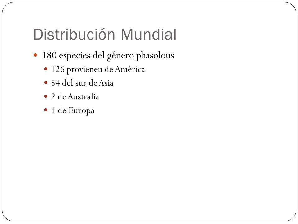 Distribución Mundial 180 especies del género phasolous 126 provienen de América 54 del sur de Asia 2 de Australia 1 de Europa