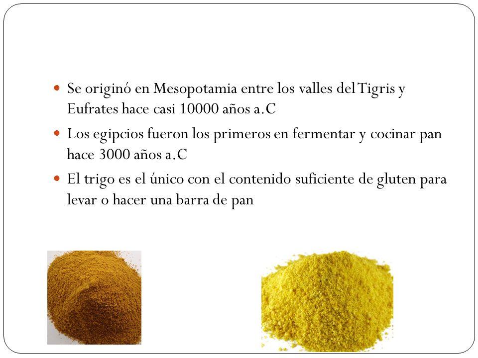 Se originó en Mesopotamia entre los valles del Tigris y Eufrates hace casi 10000 años a.C Los egipcios fueron los primeros en fermentar y cocinar pan