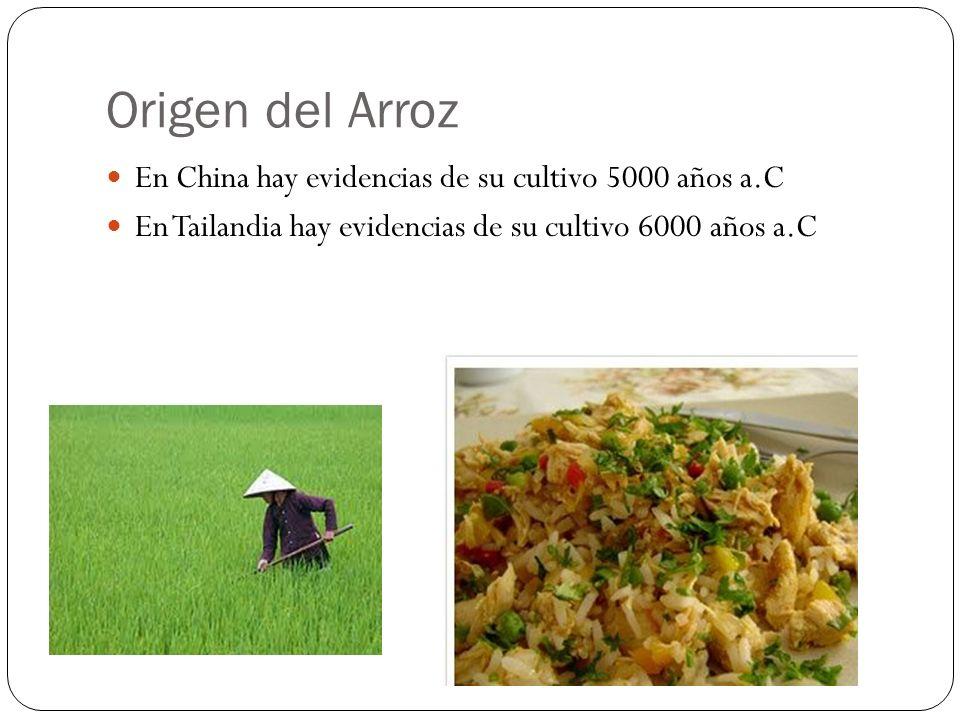 El desarrollo de diferentes tipos de maíz va en paralelo con las civilizaciones Los dentados están asociados con los mayas Los cónicos están asociados con los aztecas