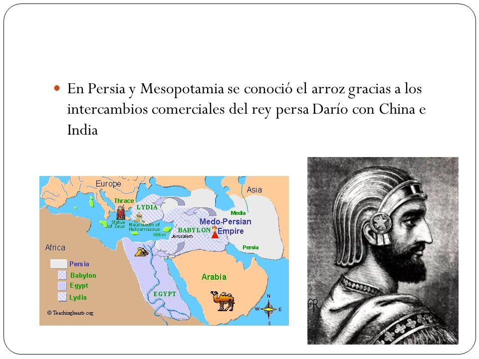 En Persia y Mesopotamia se conoció el arroz gracias a los intercambios comerciales del rey persa Darío con China e India