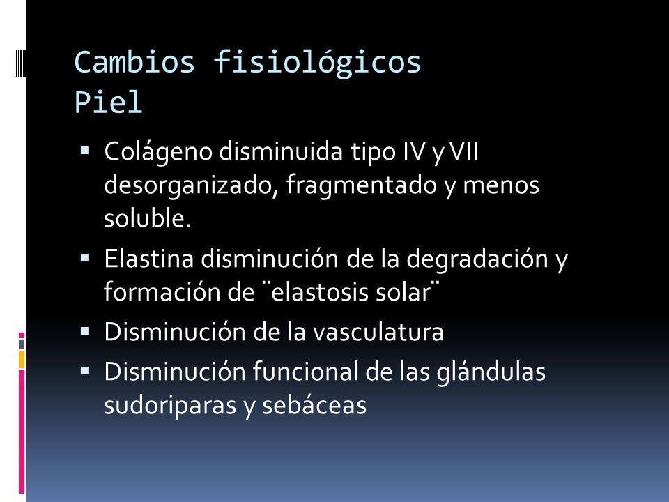 Cambios fisiológicos Piel Colágeno disminuida tipo IV y VII desorganizado, fragmentado y menos soluble. Elastina disminución de la degradación y forma