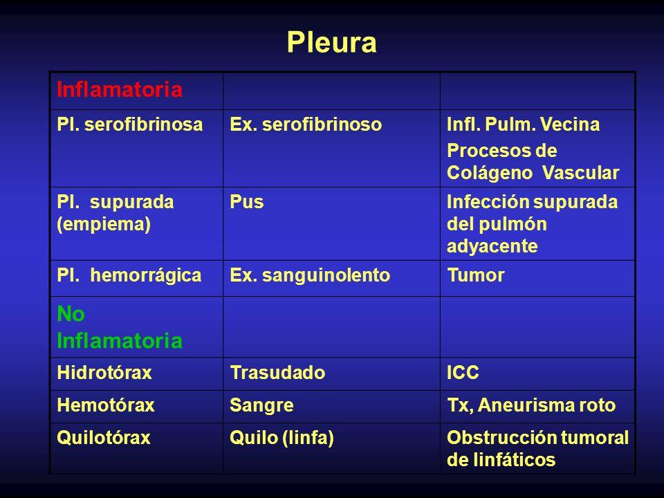 Pleura Inflamatoria Pl. serofibrinosaEx. serofibrinosoInfl. Pulm. Vecina Procesos de Colágeno Vascular Pl. supurada (empiema) PusInfección supurada de
