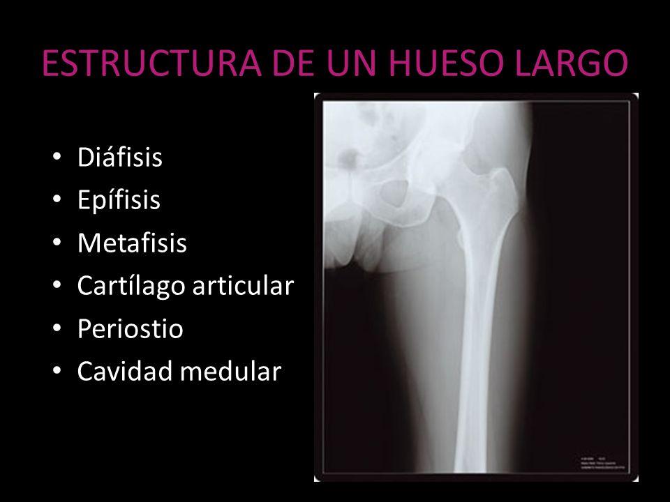 PET- FDG 18 Fluoro 2 Desoxiglucosa Actividad biológica de lesiones óseas Metástasis a distancia Recurrencia tumoral Respuesta a tx Sensibilidad 93% Especificidad 66% Exactitud 81%