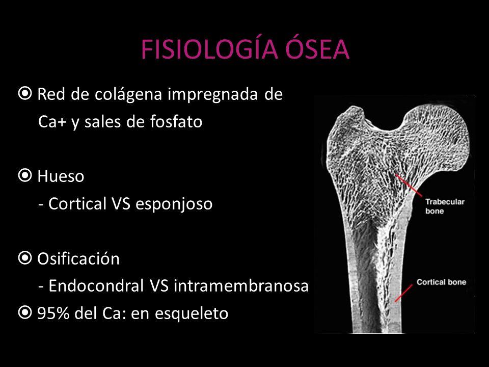 FISIOLOGÍA ÓSEA Red de colágena impregnada de Ca+ y sales de fosfato Hueso - Cortical VS esponjoso Osificación - Endocondral VS intramembranosa 95% de