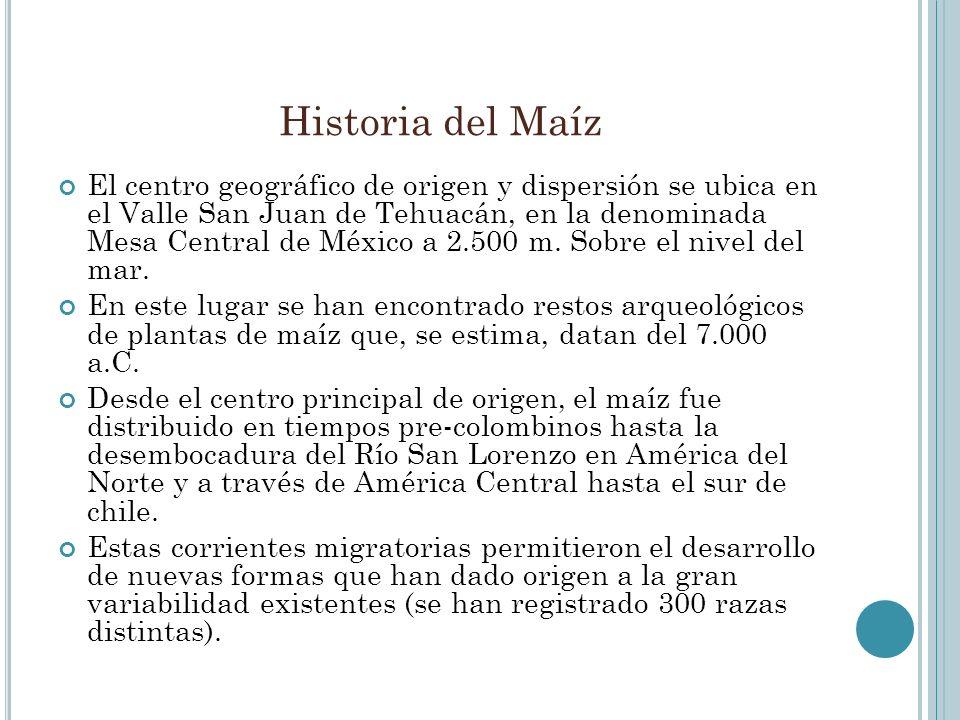 Historia del Maíz El centro geográfico de origen y dispersión se ubica en el Valle San Juan de Tehuacán, en la denominada Mesa Central de México a 2.5