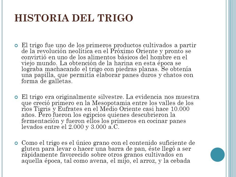 HISTORIA DEL TRIGO El trigo fue uno de los primeros productos cultivados a partir de la revolución neolítica en el Próximo Oriente y pronto se convirt