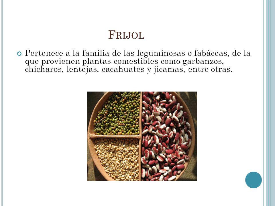 F RIJOL Pertenece a la familia de las leguminosas o fabáceas, de la que provienen plantas comestibles como garbanzos, chícharos, lentejas, cacahuates