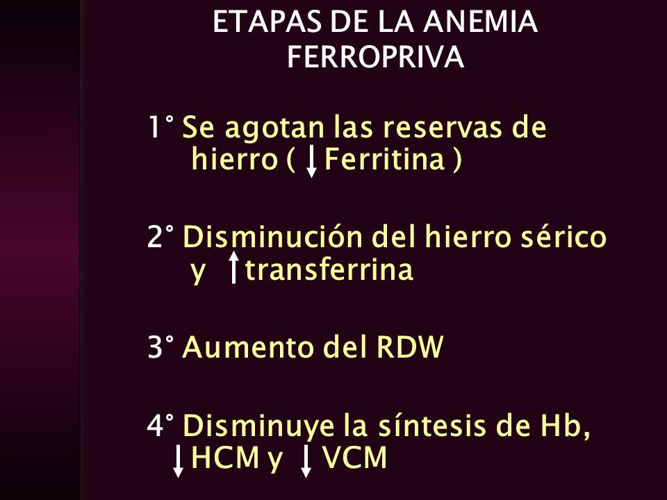 ETAPAS DE LA ANEMIA FERROPRIVA 1° Se agotan las reservas de hierro ( Ferritina ) 2° Disminución del hierro sérico y transferrina 3° Aumento del RDW 4°