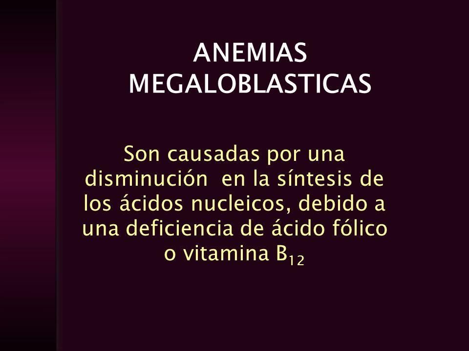 Son causadas por una disminución en la síntesis de los ácidos nucleicos, debido a una deficiencia de ácido fólico o vitamina B 12