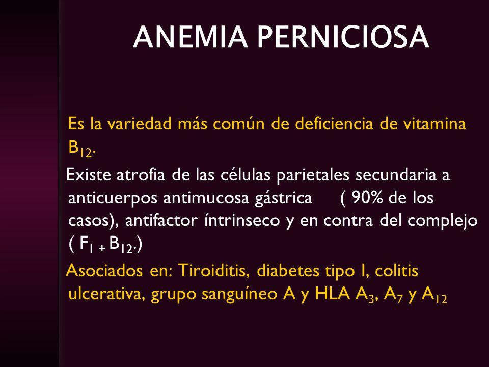 ANEMIA PERNICIOSA Es la variedad más común de deficiencia de vitamina B 12. Existe atrofia de las células parietales secundaria a anticuerpos antimuco