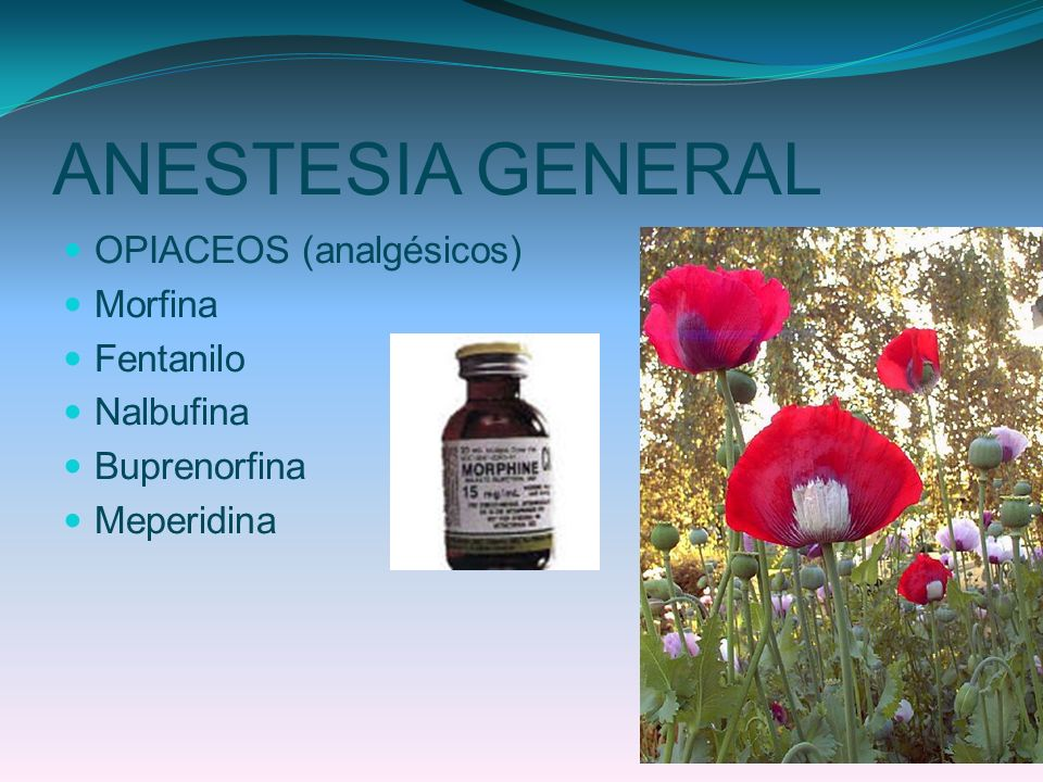 ANESTESIA GENERAL OPIACEOS (analgésicos) Morfina Fentanilo Nalbufina Buprenorfina Meperidina