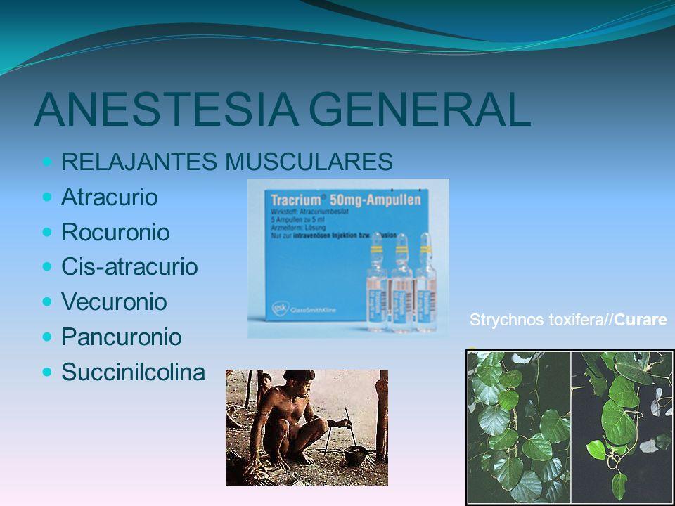 ANESTESIA GENERAL RELAJANTES MUSCULARES Atracurio Rocuronio Cis-atracurio Vecuronio Pancuronio Succinilcolina Strychnos toxifera//Curare