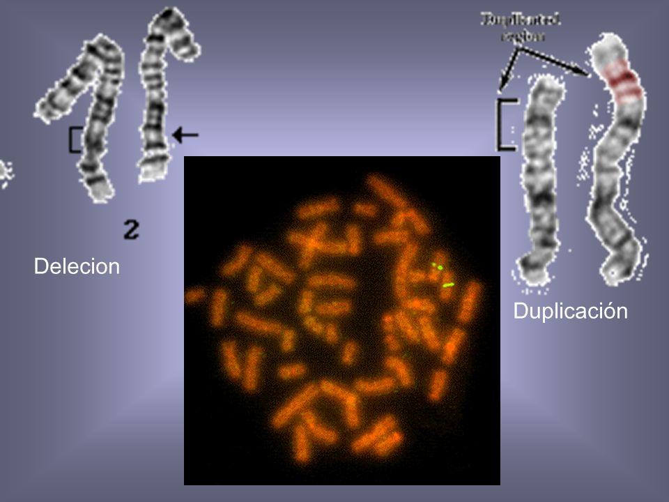 Cromosoma/Gene