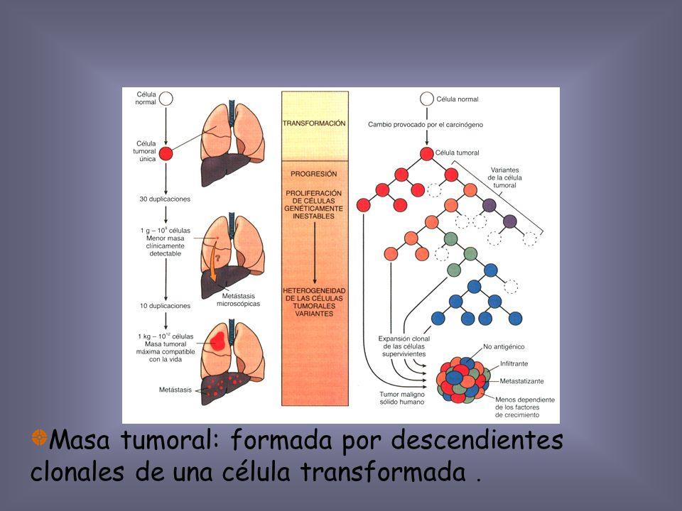 Biología del crecimiento tumoral Transformación Crecimiento Invasión local Metástasis Cinética del crecimiento Angiogénesis Heterogeneidad