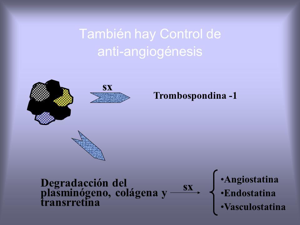 Normal = p53 Nat sx trombospondina - 1 antiangiogénesis Tumor =p53 Niveles trombop. Angiogénesis mutada libre Fenotipos de angiogénesis célulamutación