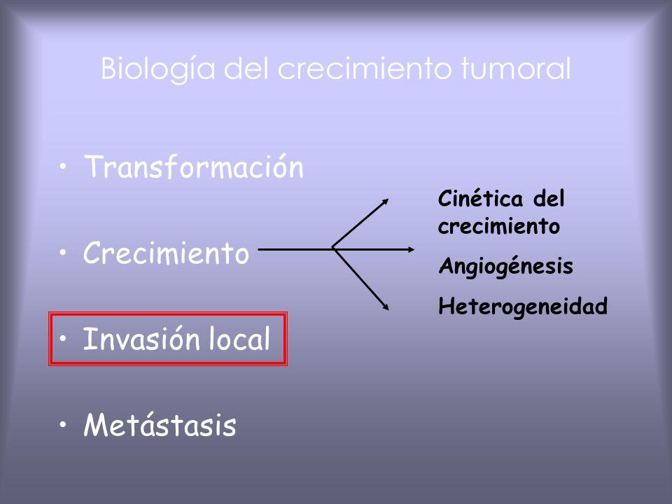 Progresión y heterogeneidad de los tumores Progresión tumoral: La malignidad se adquiere de forma progresiva 1 Crecimiento acelerado Capacidad de inva