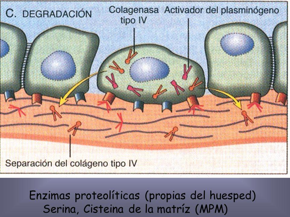 Rc laminina, fibronectina y expresión de integrinas.