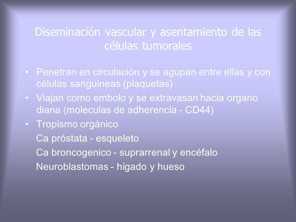 Factores de motilidad autocrino (timosina, fc.Crecim. hepatocitario) Productos de degradación de los componentes de la matríz.