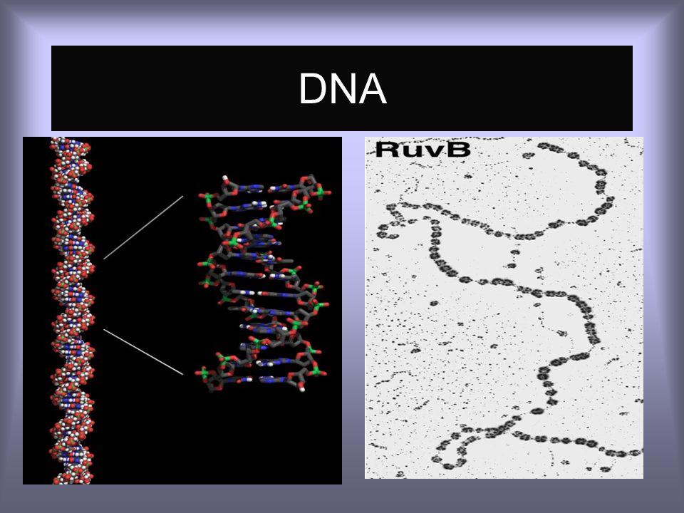 Biología Molecular en Patología Las pruebas moleculares permiten examinar la estructura y expresión de genes específicos o proteínas en tejidos normal