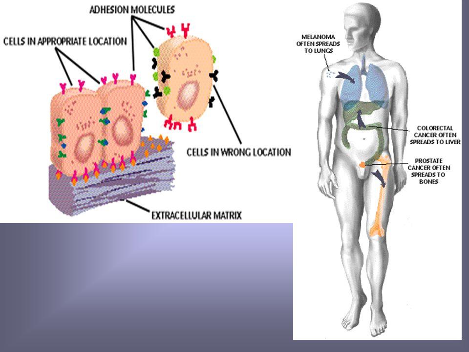 Genética molecular de las metástasis Gen metastásico Genes supresores de la metástasis. - Gen de cadherina E. - Gen de inhibidor histico metaloproteas