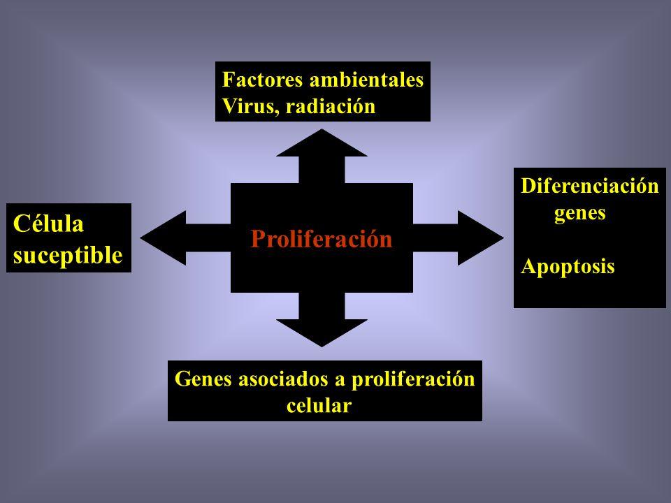 Carcinogénesis 1.- Cambio en la función de un gen 2.- Función anormal de un gen 3.- Cambios estructurales de los genes Sin alteración cromosómica no e