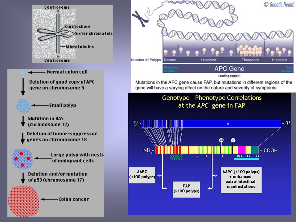 Mutaciones APC Y MCC Perdida de gpos. Metilo ADN Mutaciones del Gen RAS Perdida de Gen DCC Perdida de P53 Mecanismos moleculares CA Colon