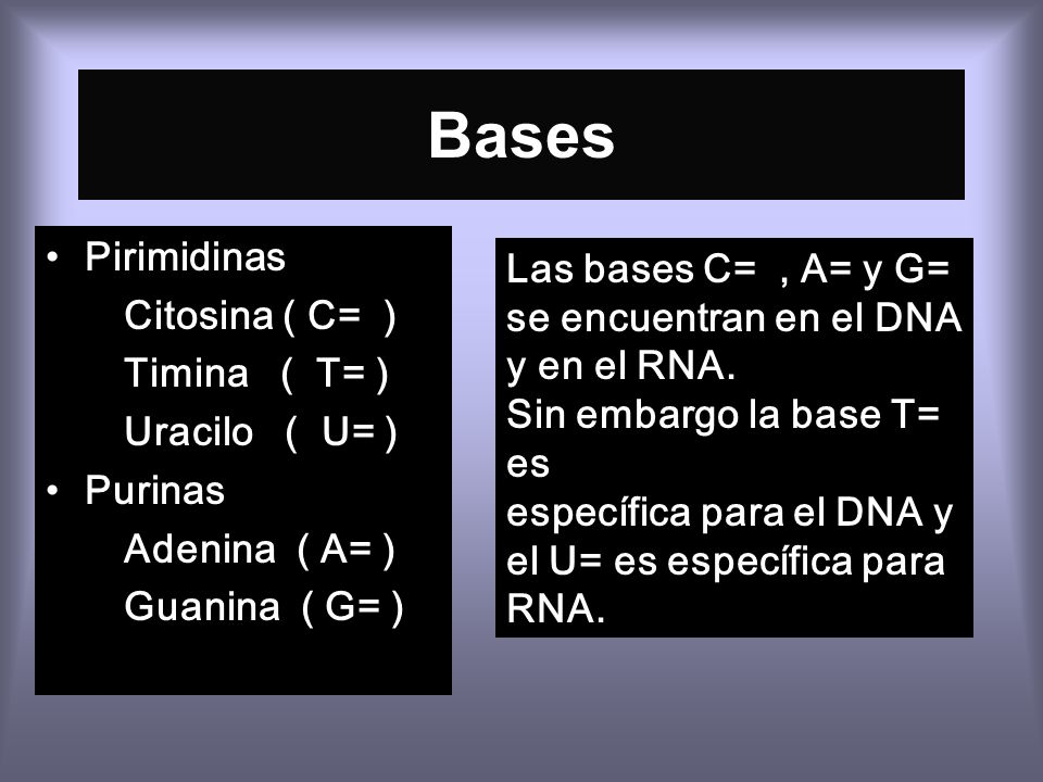 Bases Pirimidinas Citosina ( C= ) Timina ( T= ) Uracilo ( U= ) Purinas Adenina ( A= ) Guanina ( G= ) Las bases C=, A= y G= se encuentran en el DNA y en el RNA.