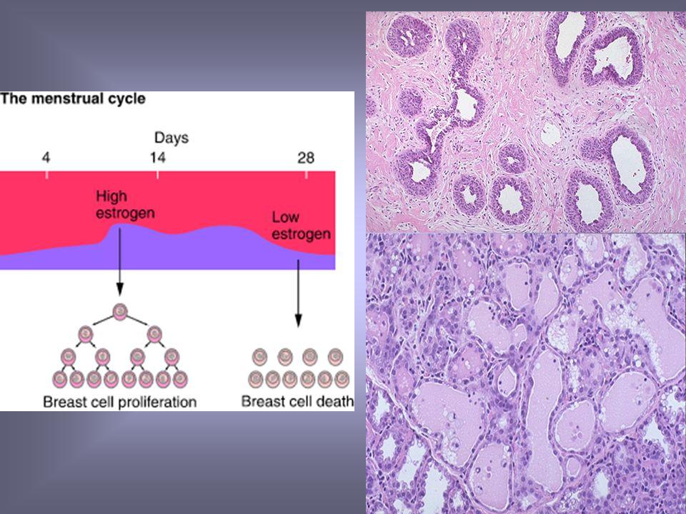 Molecula de Estrogeno Receptor de estrogenos ADN Respuesta Mediada RNAm