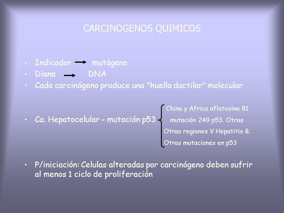 INICIACION acción directa Naturales ó sintéticos acción indirecta ó procarcinógenos Activación (carcinogeno) Inactivación (destoxificación) Monooxigen