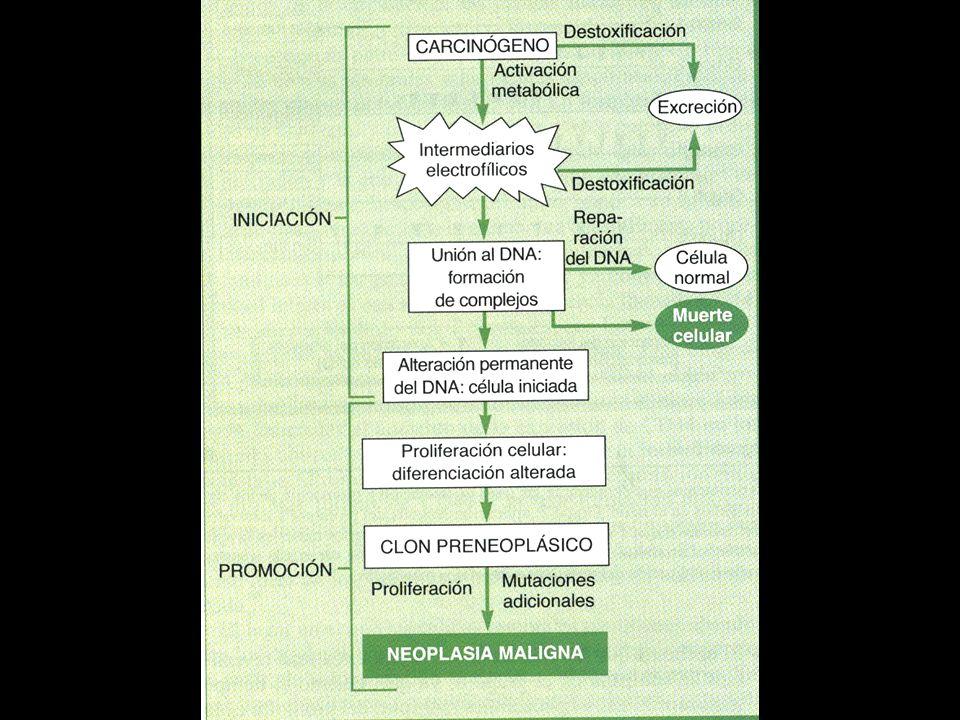 PROMOCION Capacidad carcinogénica de alguna sustacias cuando se administra un promotor que por si mismo no es tumorgénico TPA, Acido ocadoico NUEVAS I