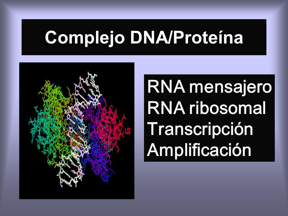 Complejo DNA/Proteína RNA mensajero RNA ribosomal Transcripción Amplificación