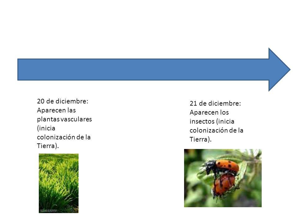 20 de diciembre: Aparecen las plantas vasculares (inicia colonización de la Tierra). 21 de diciembre: Aparecen los insectos (inicia colonización de la