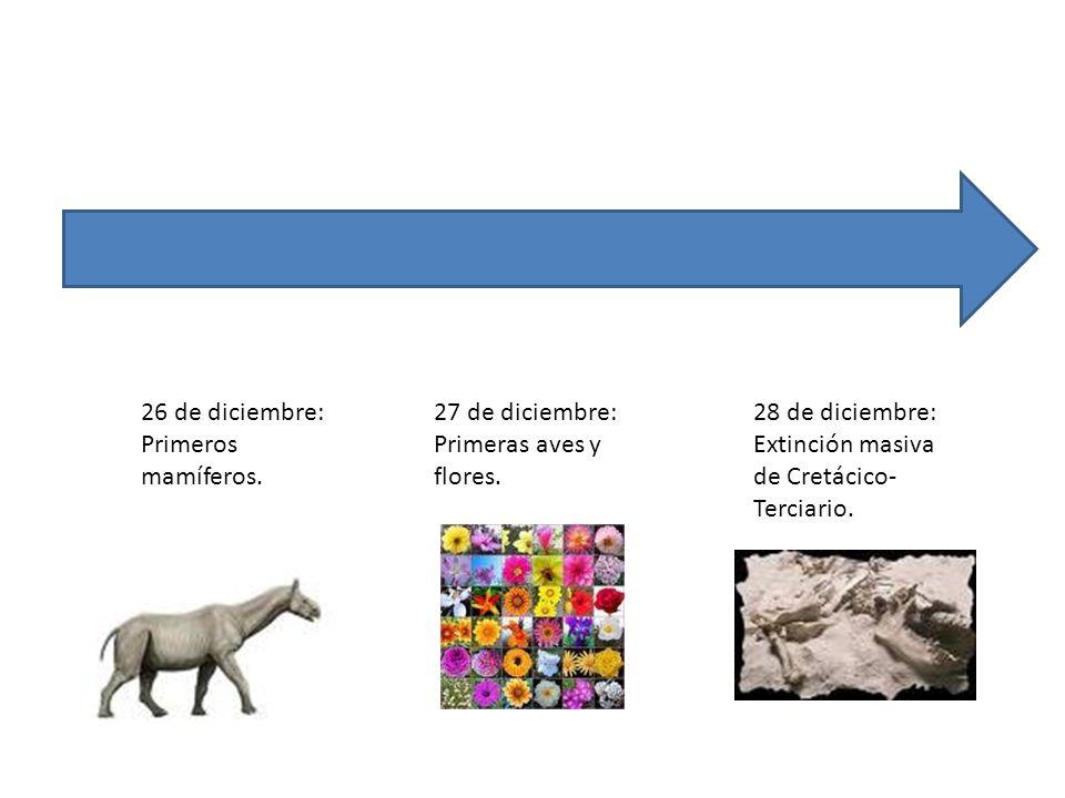 26 de diciembre: Primeros mamíferos. 27 de diciembre: Primeras aves y flores. 28 de diciembre: Extinción masiva de Cretácico- Terciario.