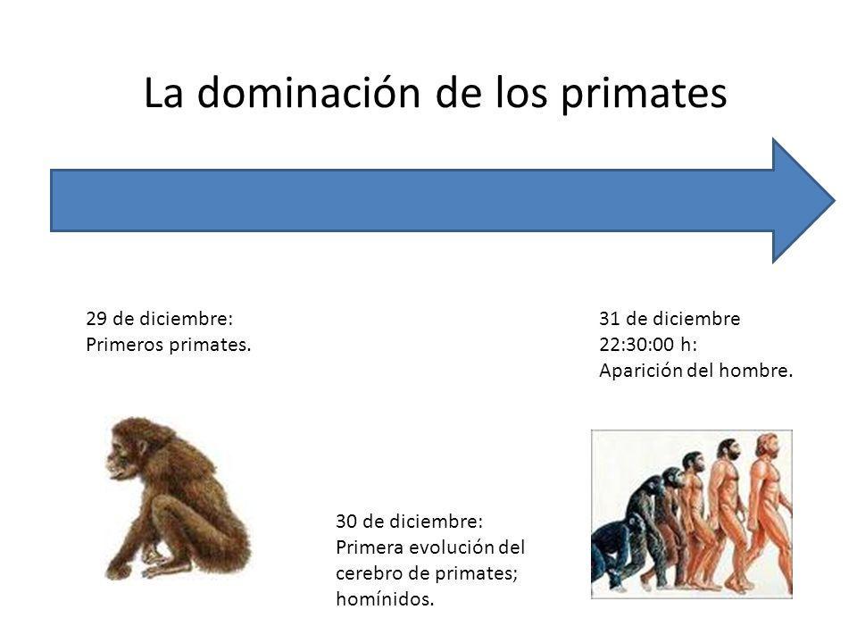 La dominación de los primates 29 de diciembre: Primeros primates. 30 de diciembre: Primera evolución del cerebro de primates; homínidos. 31 de diciemb
