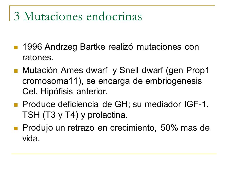 3 Mutaciones endocrinas 1996 Andrzeg Bartke realizó mutaciones con ratones. Mutación Ames dwarf y Snell dwarf (gen Prop1 cromosoma11), se encarga de e