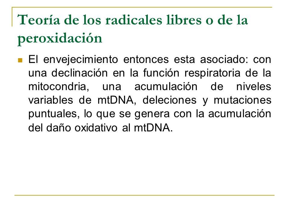 Teoría de los radicales libres o de la peroxidación El envejecimiento entonces esta asociado: con una declinación en la función respiratoria de la mit