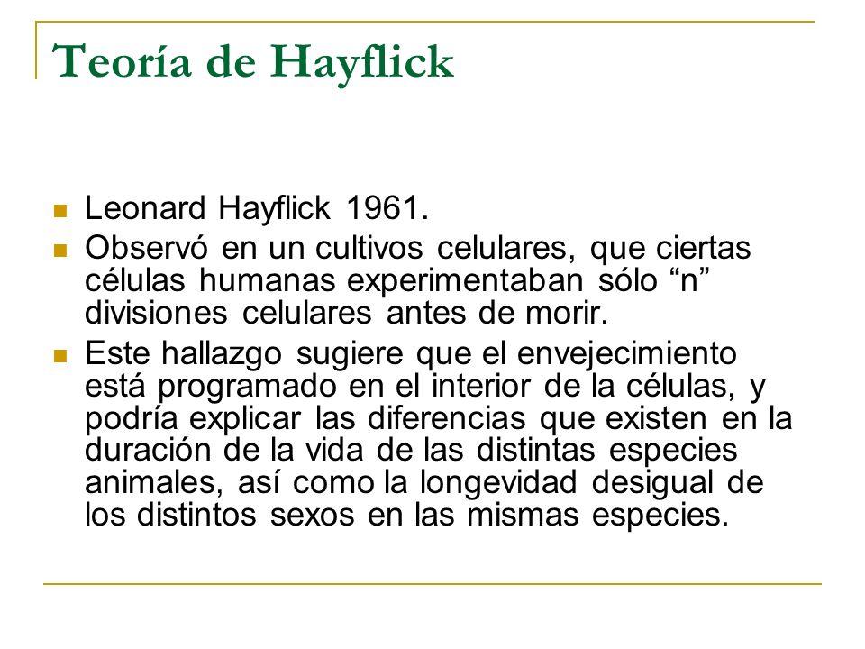 Teoría de Hayflick Leonard Hayflick 1961. Observó en un cultivos celulares, que ciertas células humanas experimentaban sólo n divisiones celulares ant
