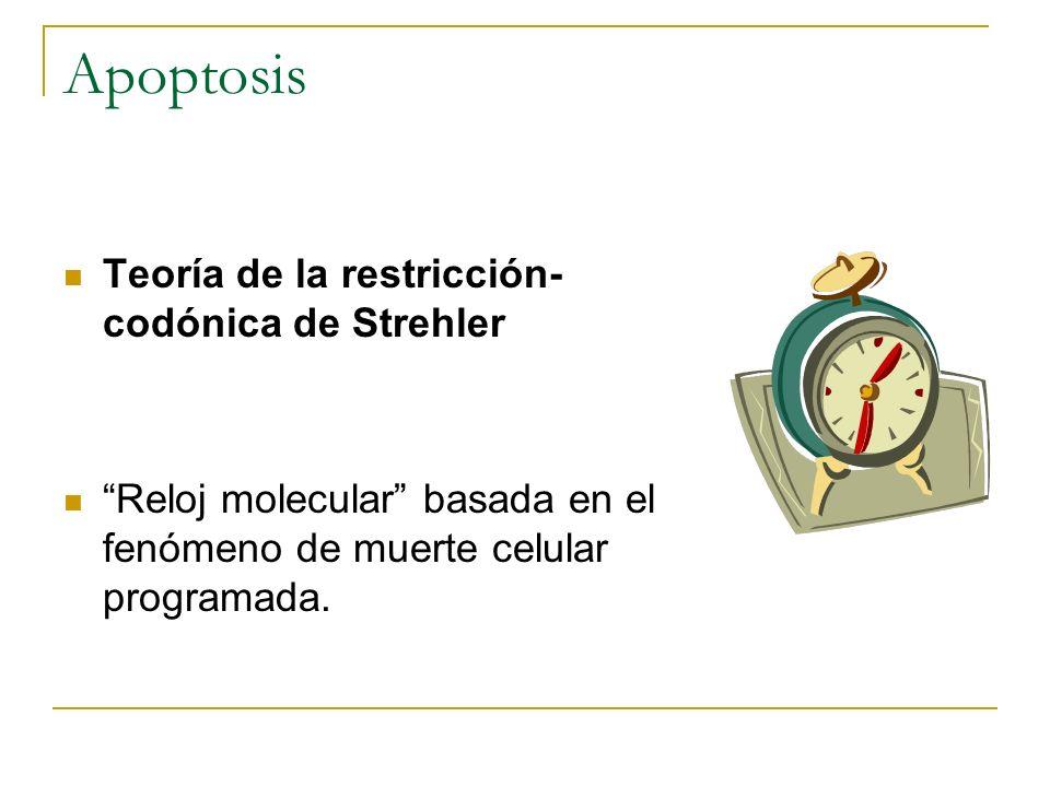 Apoptosis Teoría de la restricción- codónica de Strehler Reloj molecular basada en el fenómeno de muerte celular programada.
