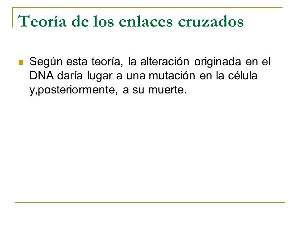 Teoría de los enlaces cruzados Según esta teoría, la alteración originada en el DNA daría lugar a una mutación en la célula y,posteriormente, a su mue
