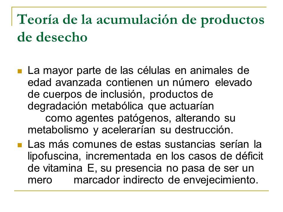 Teoría de la acumulación de productos de desecho La mayor parte de las células en animales de edad avanzada contienen un número elevado de cuerpos de