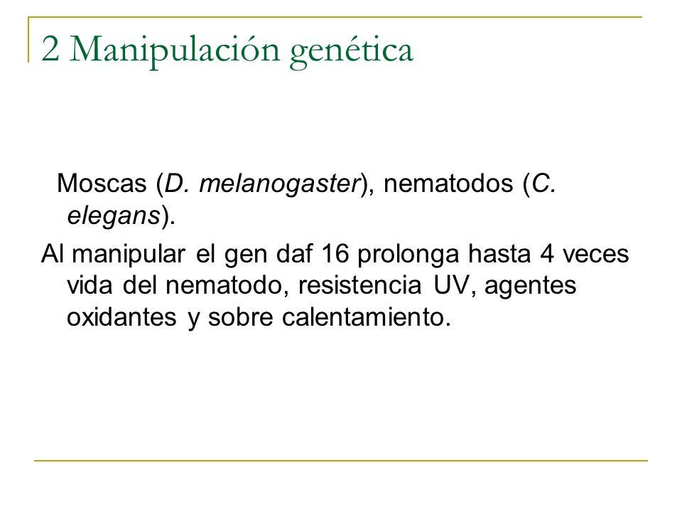2 Manipulación genética Moscas (D. melanogaster), nematodos (C. elegans). Al manipular el gen daf 16 prolonga hasta 4 veces vida del nematodo, resiste
