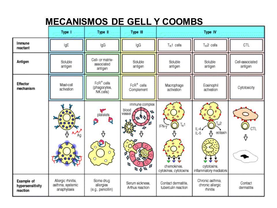 Clasificación de Dermatitis de Contacto Reacciones cutáneas/mucosas, resultado del estímulo directo exógeno.