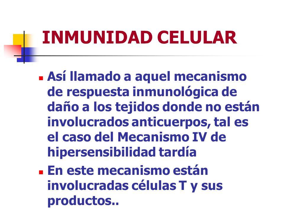 HIPERSENSIBILIDAD TIPO II Reacciones inducidas por medicamentos 2) Se forman complejos del medicamento con el anticuerpo y se adhiere a la célula, por medio del receptor Fc de la Ig o por el receptor de C3b, Cr1 y al activarse el complemento el daño ocurre por lisis de la célula..