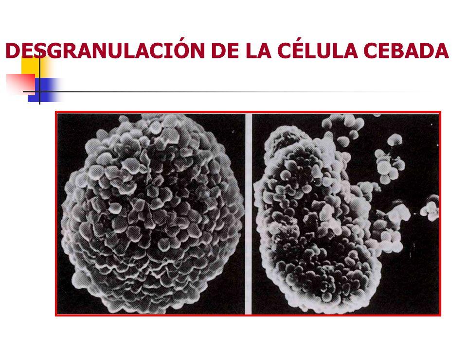 Mediadores químicos.Histamina Edema tisular. Aumento de la producción de moco.