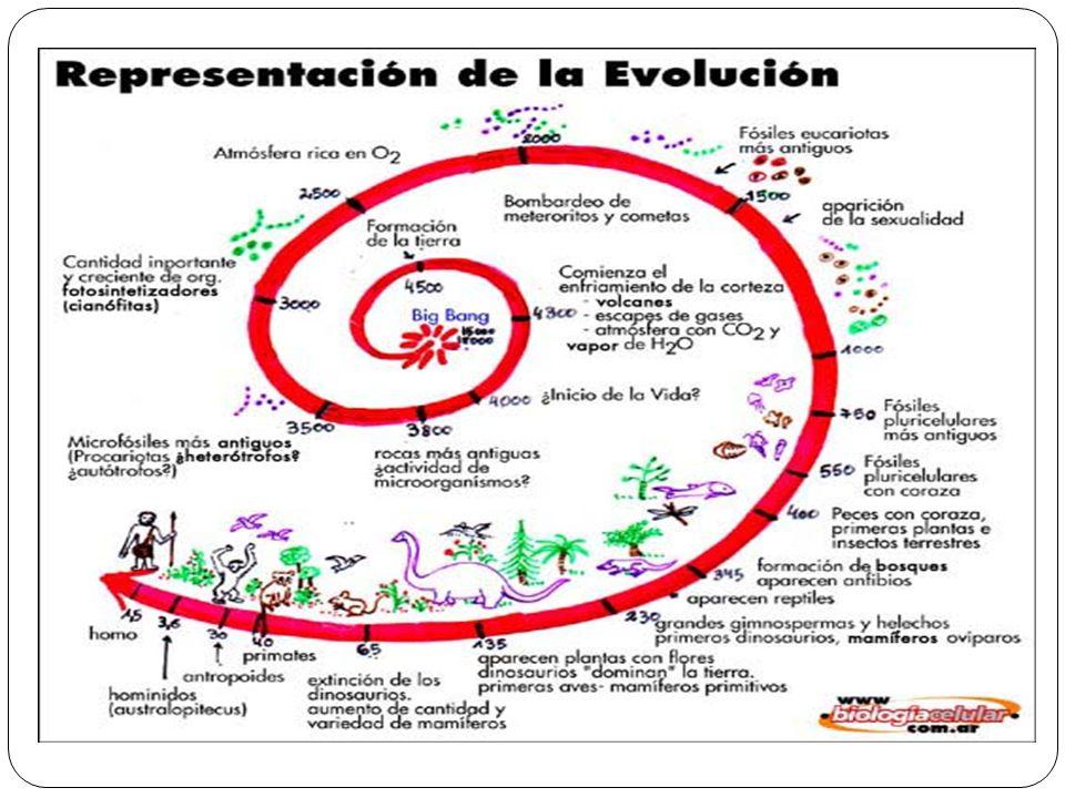Evolución La evolución biológica es el conjunto de transformaciones o cambios a través del tiempo que ha originado la diversidad de formas de vida que existen sobre la Tierra a partir de un antepasado común.